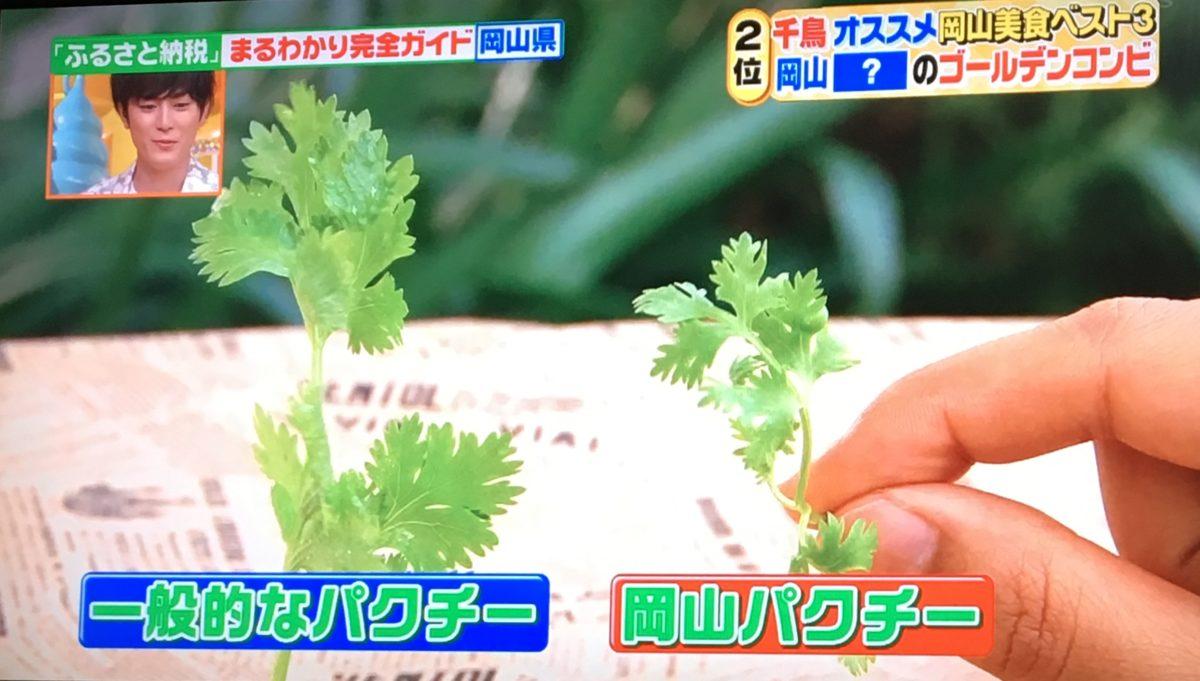 岡山パクチーの特徴