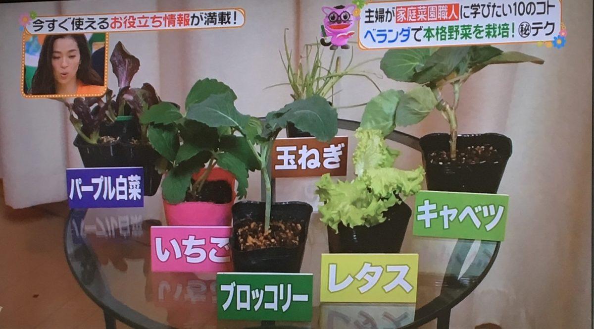 家庭菜園で育てる野菜