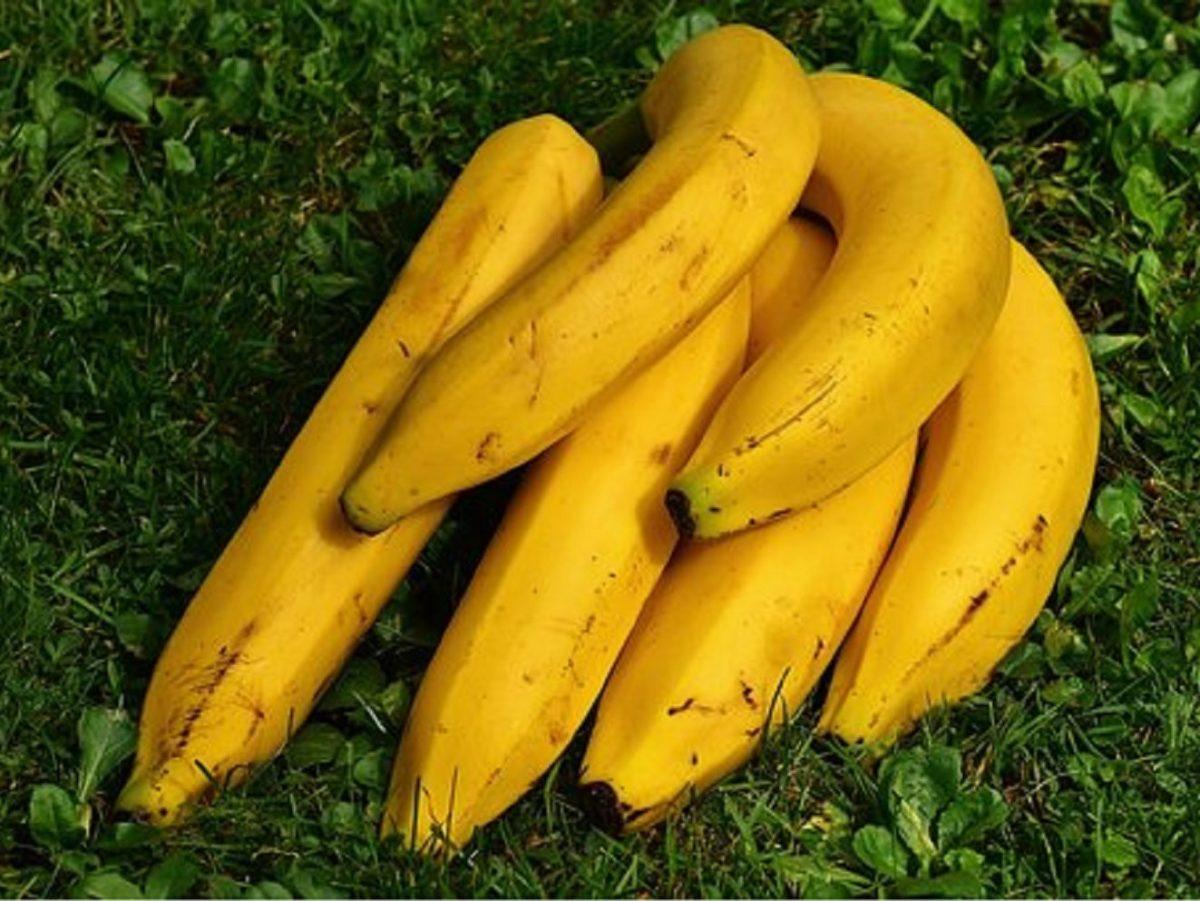 あさイチ!バナナ