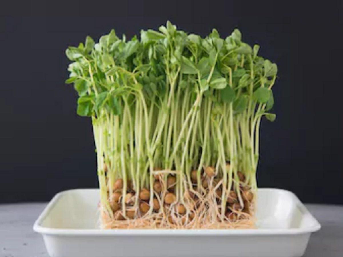 ヒルナンデス!豆苗レシピ
