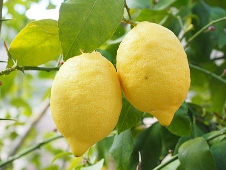 レモンのレシピ3