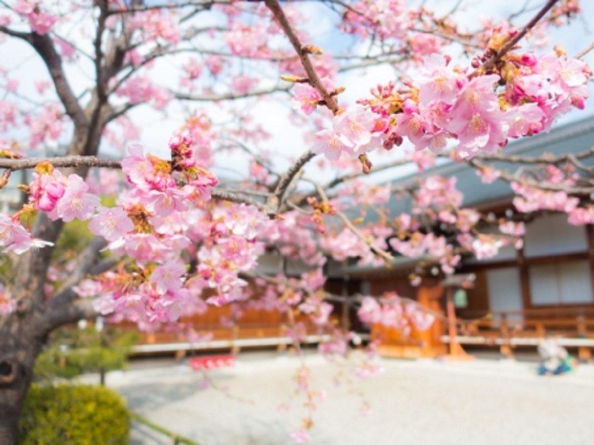 桜の絶景お花見スポットランキング