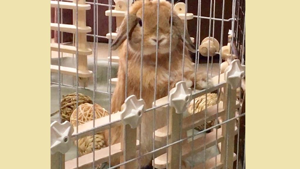 立ち上がるウサギ