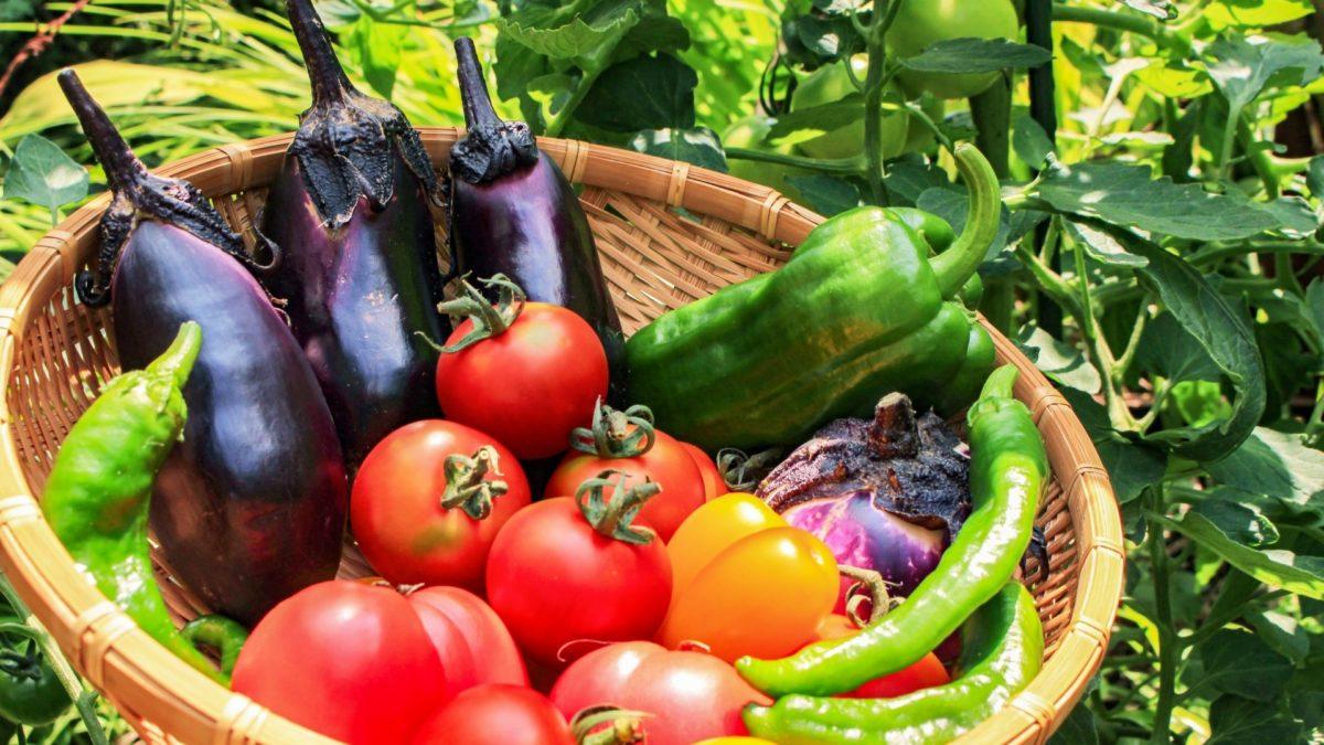 あさイチの夏野菜