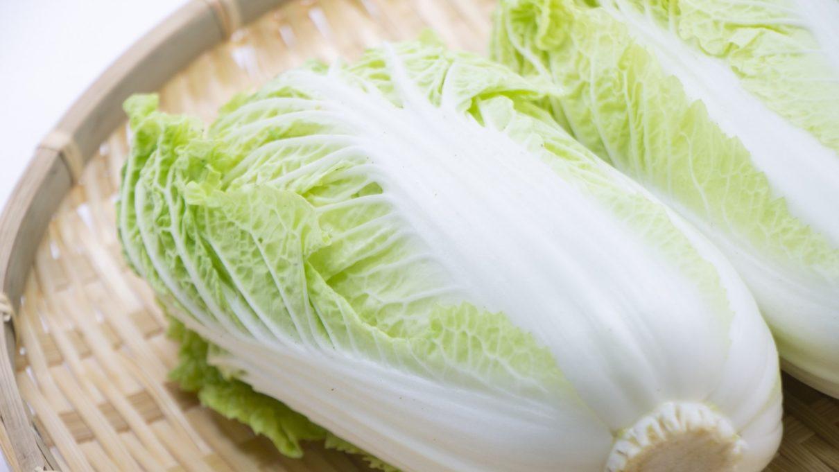 ジョブチューン 白菜料理レシピ